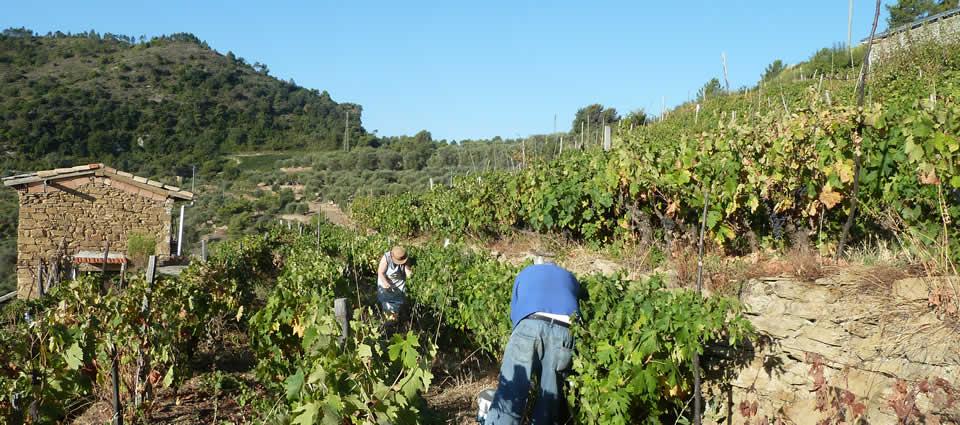 Produttori di olio e vino ligure